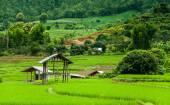 Fresh Terrace rice field  — Stockfoto