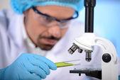 Laboratoryjnym — Zdjęcie stockowe