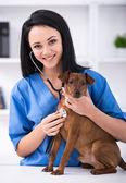 Veterinary — Stock Photo