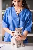 Veterinarian — Stock Photo
