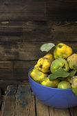 Plucked from the tree quince. — Stock Photo