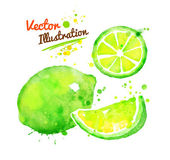 Watercolor lime illustration — Stock Vector