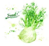 Drawn Watercolor fennel. — Stock Photo