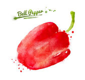 Drawn Watercolor bell pepper — Stock Photo