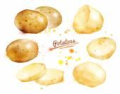 Watercolor and drawn  potatoes. — Stock Photo