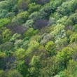 Forest seamless pattern — Stock Photo #54139133