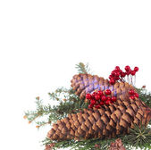 Christmas decorative fir branches — Stock Photo