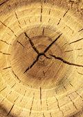 Fondo de madera natural — Foto de Stock