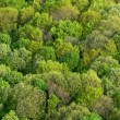 Forest seamless pattern — Stock Photo #54140929