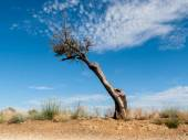 Dead and naked tree — Stock Photo