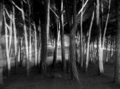 Sunbeams through trees — Stock Photo