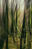 Whirl of light and wind in the forest — Stock Photo