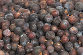 Dried juniper berries — Stock Photo