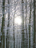 Forrest in winter time — Stock Photo