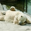 Polar she-bear with cubs sleeps — Stockfoto #71706723