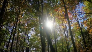 Autumn Forest - Nature HD 1080 — Stock Video