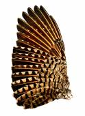 Full wing of a flicker bird — Stock Photo