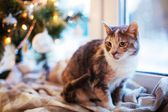 Cat near the Christmas tree with lights and toys — Stockfoto