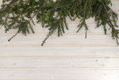 Spruce branch on a table — Stock Photo