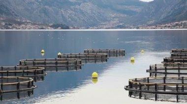 Coastal fish farming in Montenegro — Stock Video
