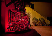 Christmas tree with red lights at Tuscan farm — Stok fotoğraf