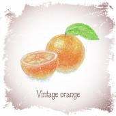 Vintage card with orange. — Stock Vector