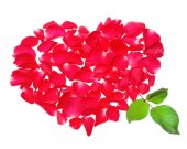 Beautiful heart of red rose petals isolated on white background — Stock Photo