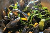 Mussels with samphire and sea lavender — Stock Photo