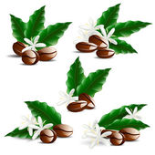 Single coffee bean with leaf isolated on white background — Stock Vector