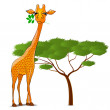 Giraffe eating leaves in Africa isolated — Stock Vector