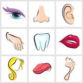 Set of vector icons Human body parts — Stock Vector