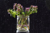 A bunch of wild plants and flowers from the meadow, in a glass — Stockfoto