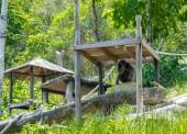 Chimpanzee sitting in the zoo. — Stock Photo