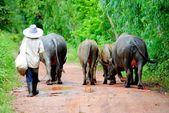 Animals and herdsman — Stock Photo