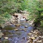 Mountain river — Stock Photo #57491363