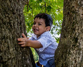 Latino child in a tree — Stock Photo