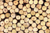 Řezání dřeva — Stock fotografie