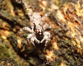 Piccolo bug, insetti, ragno in obbligate — Foto Stock