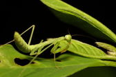 Small insect and bug — Stock Photo