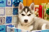Excellent puppy — Stockfoto