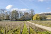 Aloxe-Corton, Burgundy, wineyard's, france — Stock Photo
