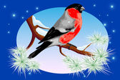 Bullfinch 1 winter — Stockvector
