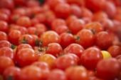 Orgánicamente fondo rojo tomate cherry — Foto de Stock