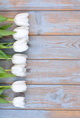 Bunch of White tulips on a old used blue grey wooden shelves background with empty space layout — Stock Photo