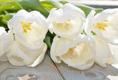 Close up of white transparant tulips with sunlight on old wooden blue grey background — Foto de Stock