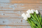 Bunch of White tulips on a old used blue grey wooden shelves background with empty space layout — Stock fotografie