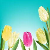 Realistic Colorful Tulips in Isolated Background — Stockvektor