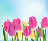 Realistic Colorful Tulips in Isolated Background — Vetor de Stock