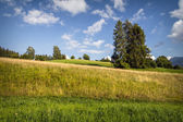Landschaft — Stockfoto