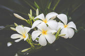 White flower vintage background — Stock Photo